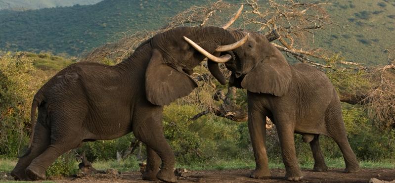 Tanzania_safaris
