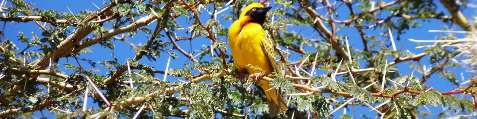 Birding Kenya