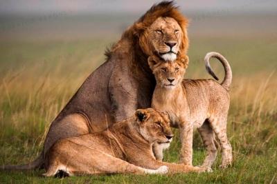 7 Days Masai Mara/Nakuru/ Naivasha & Amboseli
