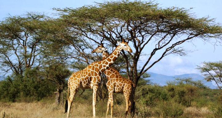 Samburu_National_Park