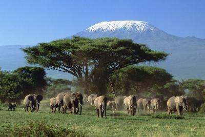 amboseli_elephants